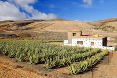 Azienda agricola di vera dell'aloe su Fuerteventura, Isole Canarie Immagini Stock Libere da Diritti