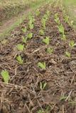 Azienda agricola di verdure immagine stock libera da diritti