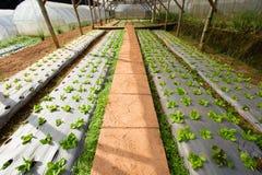 Azienda agricola di verdure Fotografie Stock Libere da Diritti