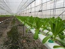Azienda agricola di verdure idroponica Immagine Stock Libera da Diritti