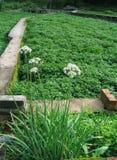 Azienda agricola di verdure, tropici Fotografia Stock