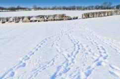 Azienda agricola di Yorkshire Fotografia Stock Libera da Diritti
