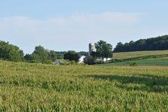 Azienda agricola e campi di grano di countriside della Pensilvania Immagini Stock Libere da Diritti