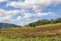 Azienda agricola e montagna Immagine Stock