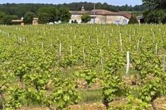 Azienda agricola e vigna del vino nel paesaggio rurale, Francia Immagine Stock Libera da Diritti