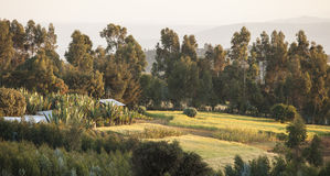Azienda agricola in Etiopia Fotografie Stock Libere da Diritti
