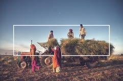 Azienda agricola familiare dell'India che raccoglie concetto dei raccolti Immagine Stock