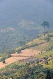 Azienda agricola Guatemala del caffè Fotografia Stock Libera da Diritti