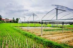 Azienda agricola i di Paco Fern fotografie stock