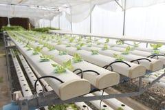 Azienda agricola idroponica Fotografie Stock Libere da Diritti
