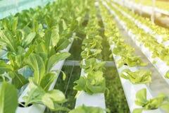 Azienda agricola idroponica, alimento di concetto per sano Immagine Stock Libera da Diritti