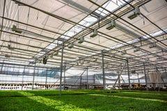 Azienda agricola idroponica organica della scuola materna di coltivazione delle piante ornamentali Grande serra moderna Fotografie Stock Libere da Diritti