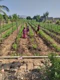 Azienda agricola indiana del villaggio dei bambini lavoranti dentro fotografia stock libera da diritti