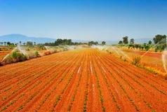 Azienda agricola irrigata Fotografie Stock Libere da Diritti