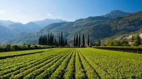 Azienda agricola italiana Fotografia Stock Libera da Diritti