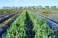 Azienda agricola moderna Fotografia Stock Libera da Diritti
