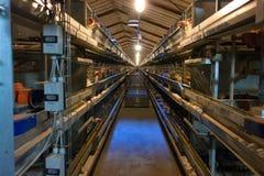 Azienda agricola moderna della gabbia di pollo Fotografia Stock
