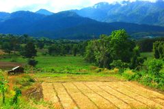 Azienda agricola in natura Fotografia Stock Libera da Diritti