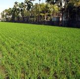 Azienda agricola nei tropici Fotografia Stock