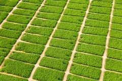 Azienda agricola nel deserto Immagine Stock Libera da Diritti