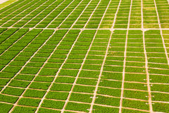 Azienda agricola nel deserto Immagine Stock