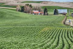 Azienda agricola nel Palouse Immagini Stock