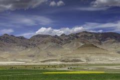 Azienda agricola nel plateau del Tibet Immagine Stock