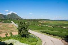 Azienda agricola Nuture del tè Fotografia Stock