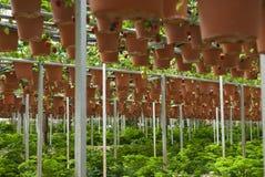 Azienda agricola organica Fotografia Stock Libera da Diritti