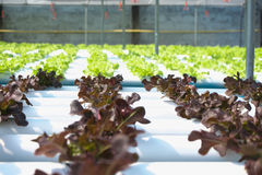 Azienda agricola organica fotografie stock