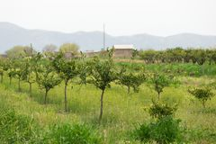 Azienda agricola organica Agricoltura ecologica Immagine Stock