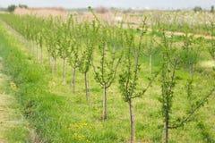 Azienda agricola organica Agricoltura ecologica Fotografia Stock Libera da Diritti