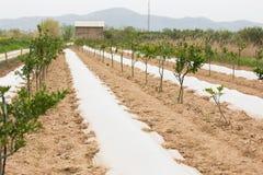 Azienda agricola organica Agricoltura ecologica Immagine Stock Libera da Diritti