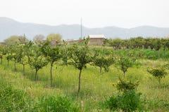 Azienda agricola organica Agricoltura ecologica Fotografie Stock Libere da Diritti
