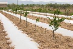 Azienda agricola organica Agricoltura ecologica Fotografia Stock