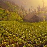 Azienda agricola organica con poca casa Immagini Stock Libere da Diritti