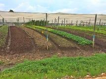Azienda agricola organica di Quan Fa Fotografia Stock