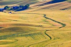 Azienda agricola Palouse Washington dell'erba del frumento di verde giallo immagine stock libera da diritti
