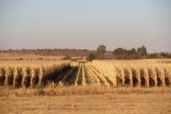 Azienda agricola a Potchefstroom, Sudafrica immagini stock libere da diritti