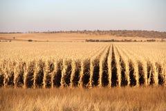 Azienda agricola a Potchefstroom, Sudafrica fotografie stock