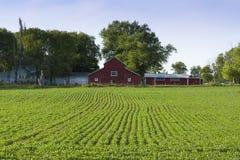 Azienda agricola rossa Immagini Stock