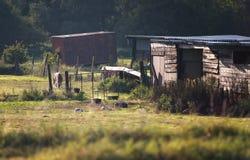 Azienda agricola rurale con gli animali immagini stock libere da diritti