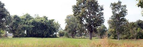 Azienda agricola rurale del riso di agricoltura di panorama Immagini Stock Libere da Diritti