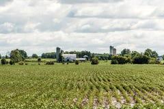 Azienda agricola rurale di Ontario con l'agricoltura del Canada degli animali di agricoltura di stoccaggio del silo del granaio Immagini Stock