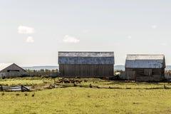 Azienda agricola rurale di Ontario con l'agricoltura del Canada degli animali di agricoltura di stoccaggio del silo del granaio Immagini Stock Libere da Diritti