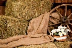 Azienda agricola rustica interna: ruota del fieno e merce nel carrello della margherita Immagini Stock Libere da Diritti