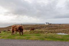 Azienda agricola scozzese Immagini Stock Libere da Diritti