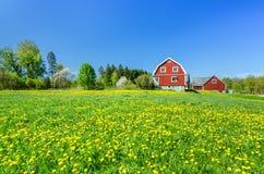 Azienda agricola svedese con i fiori del dente di leone Fotografie Stock
