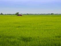 Azienda agricola tailandese Immagine Stock Libera da Diritti