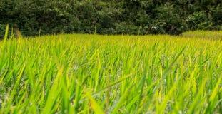 Azienda agricola tailandese Immagini Stock